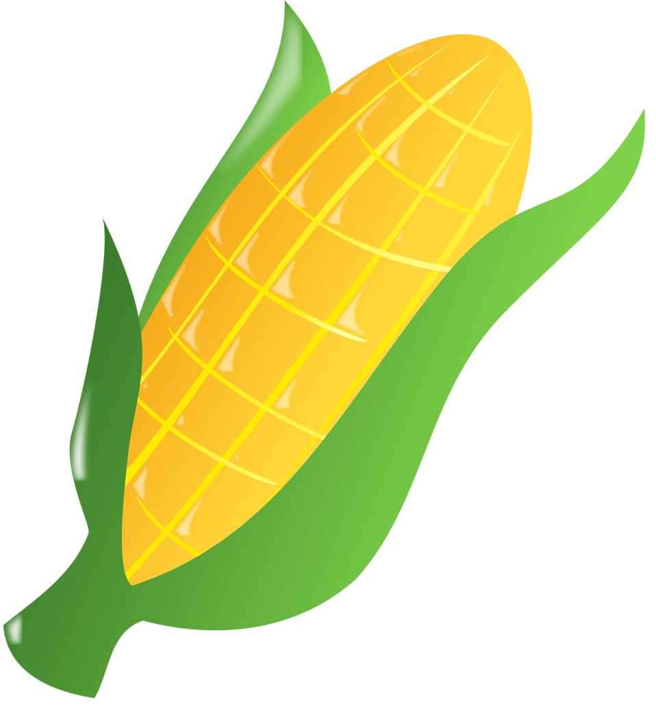 Illustration of an ear of corn : Free Stock Photo