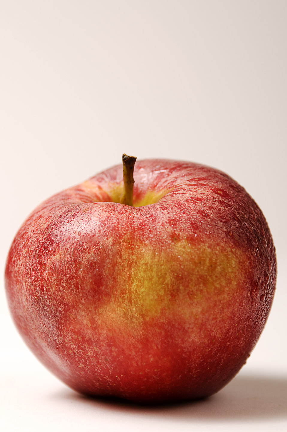 A fresh red Gala apple : Free Stock Photo