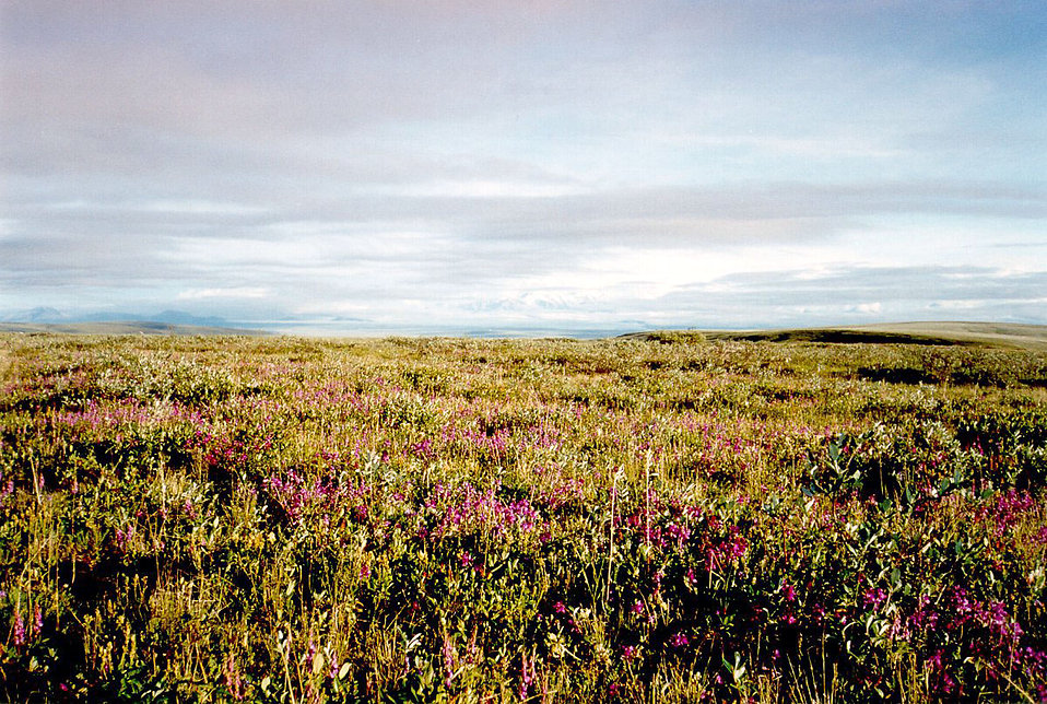 Image of the Arctic National Wildlife Refuge tundra.