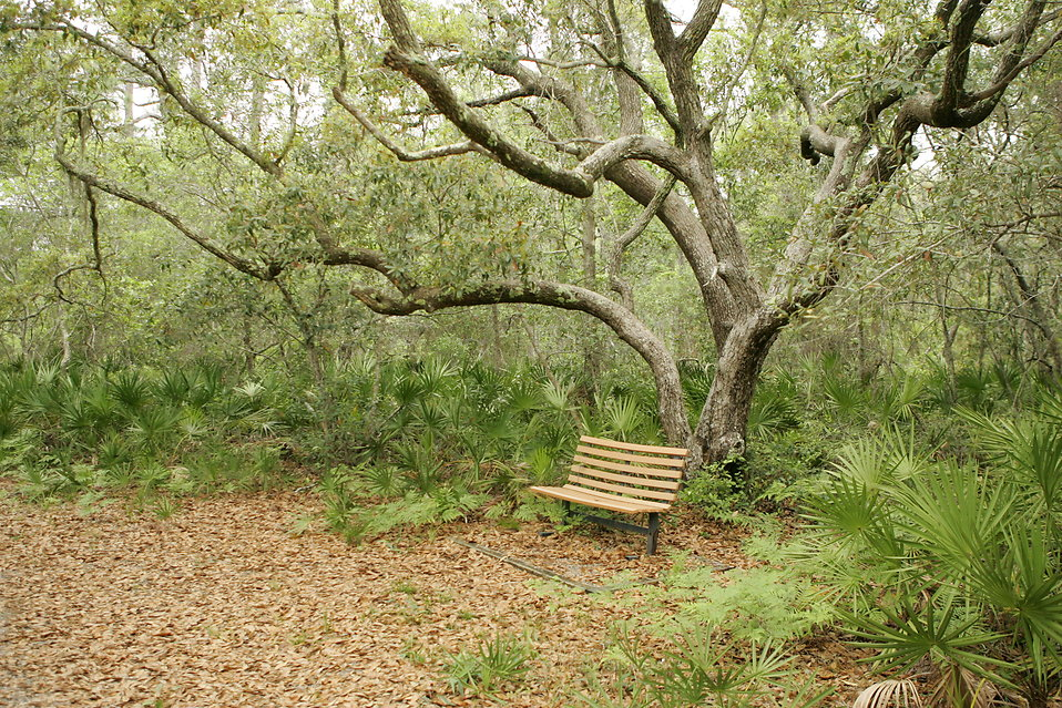 A bench on a trail in the woods : Free Stock Photo