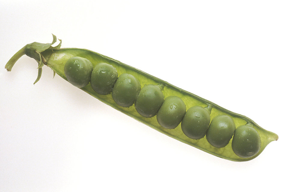 A string of peas in a pod : Free Stock Photo