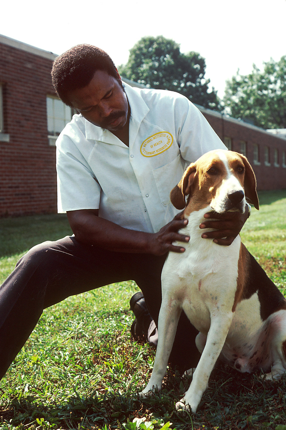 Pictured is a handler, kneeling, wearing a white lab shirt. He is holding a fox hound.