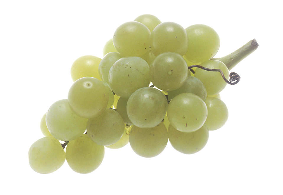 A large bunch of green grapes : Free Stock Photo