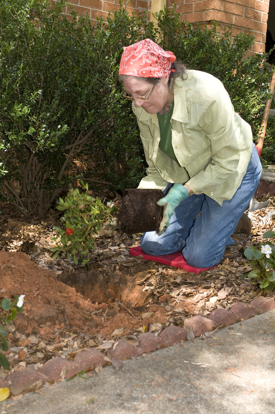 Garden Free Stock Photo A Woman Working In Her Garden