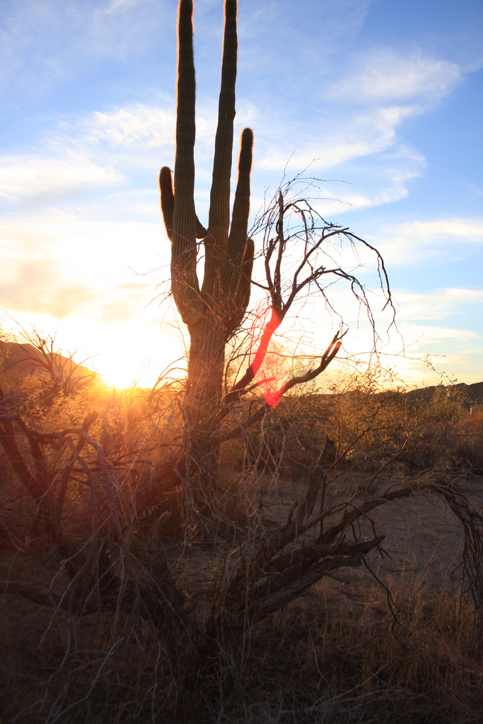 A cactus silhouetted by the morning sun : Free Stock Photo