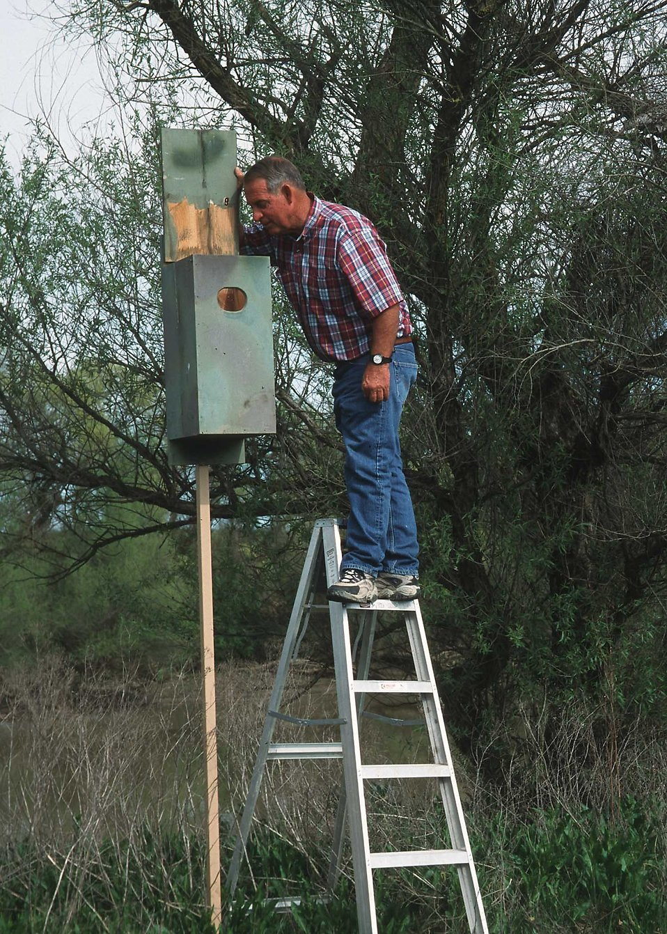 A man checking a birdhouse : Free Stock Photo
