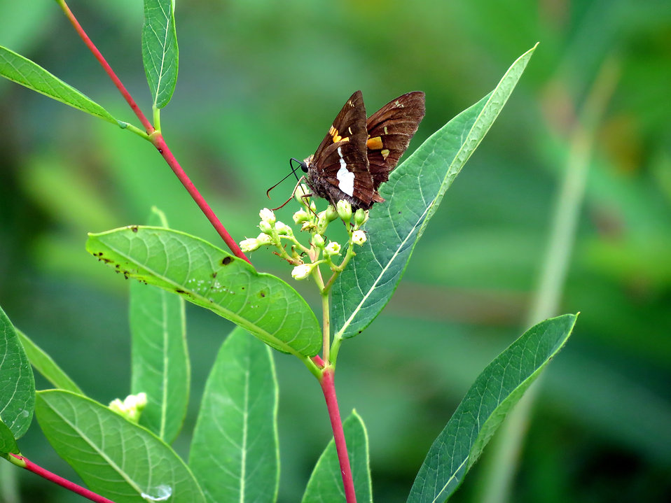 A brown butterfly on a leaf : Free Stock Photo