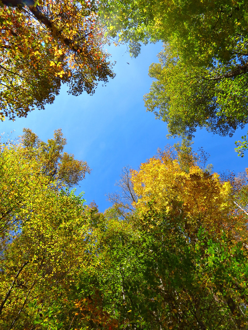 Colorful autumn tree tops : Free Stock Photo