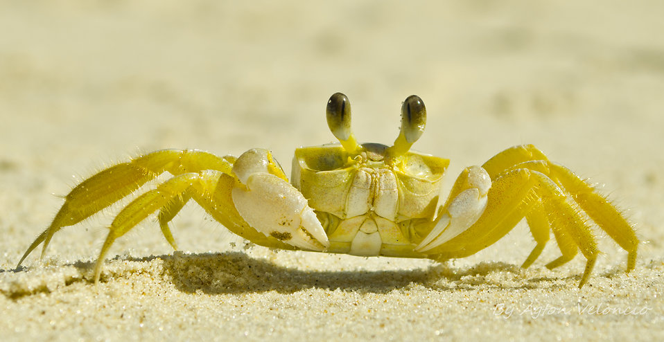 Crab close-up : Free Stock Photo