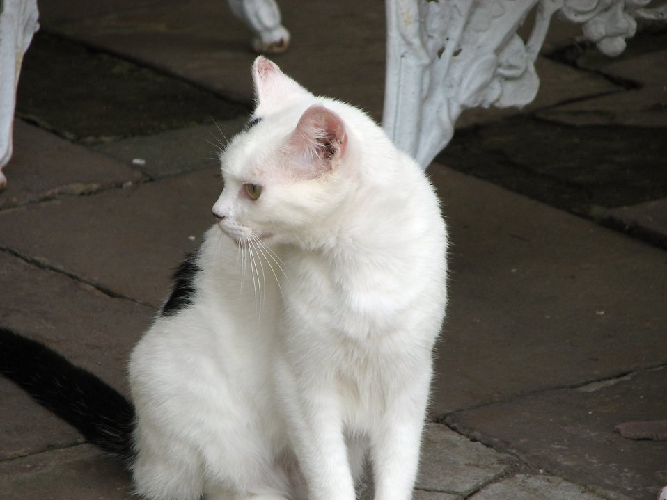 Closeup of a white and black cat sitting outside : Free Stock Photo