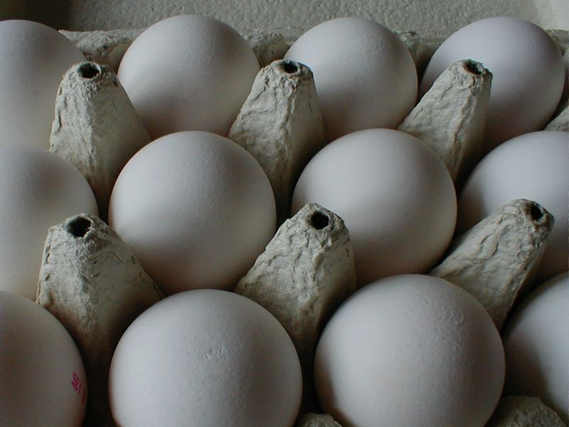 Closeup of eggs in a carton : Free Stock Photo