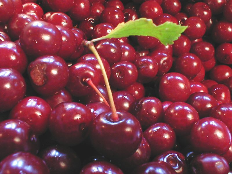 Closeup of a bunch of red cherries : Free Stock Photo