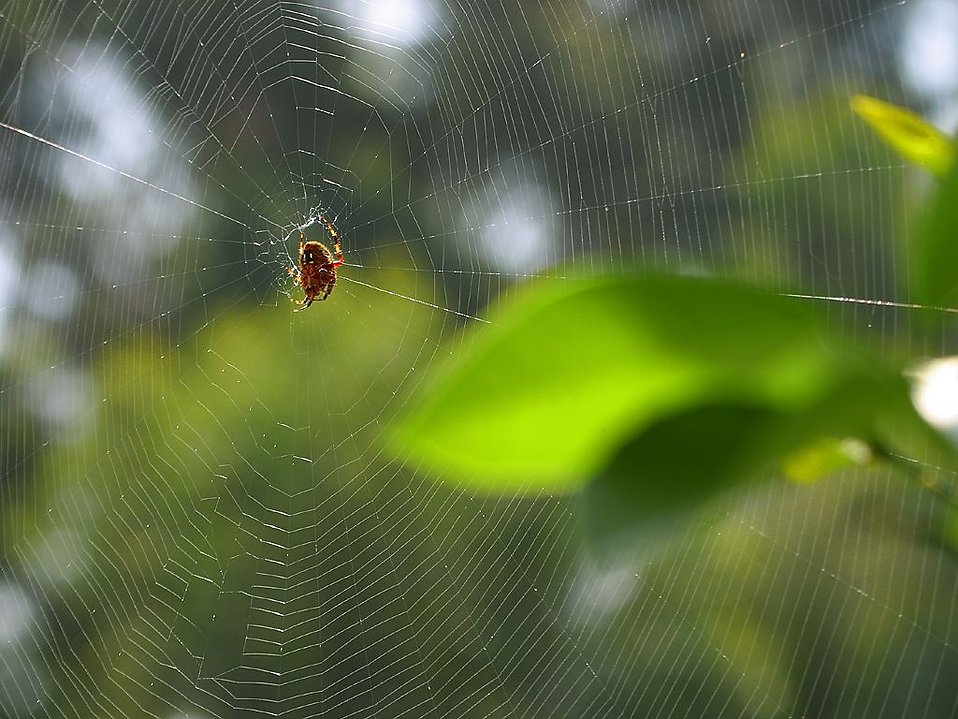A spider on a spiderweb : Free Stock Photo