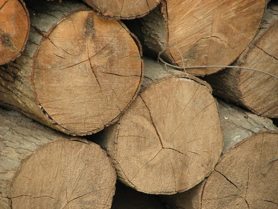 Closeup of a pile of cut logs : Free Stock Photo