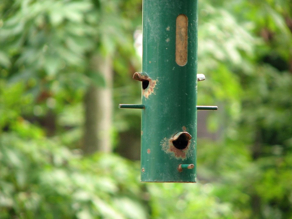 Closeup of a green bird feeder hanging in the trees : Free Stock Photo