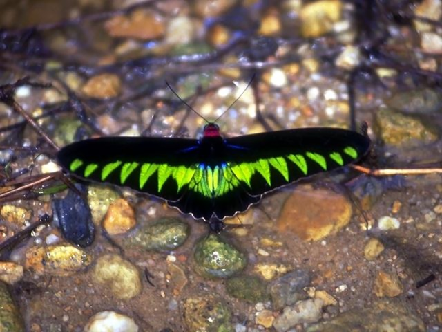 Close-up of a bright green butterfly : Free Stock Photo