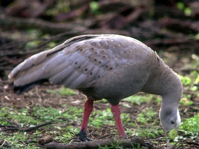 Closeup of a white bird : Free Stock Photo