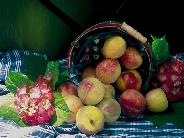 A display of apples in a basket : Free Stock Photo