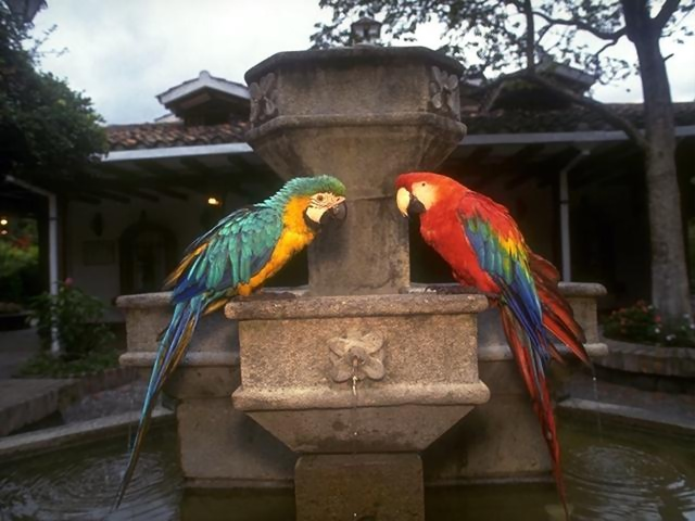 Two parrots sitting on a fountain : Free Stock Photo
