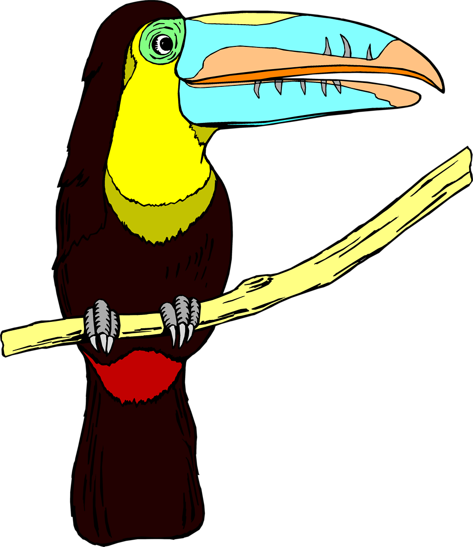 Illustration of a toucan bird : Free Stock Photo