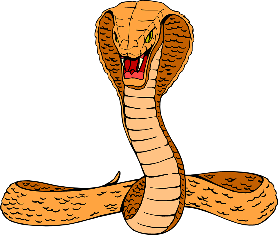Illustration of a cobra : Free Stock Photo