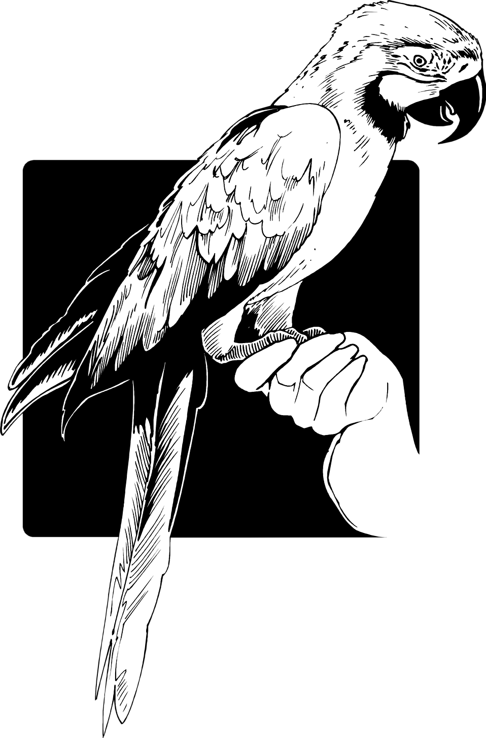Illustration of a parrot perched on a hand : Free Stock Photo