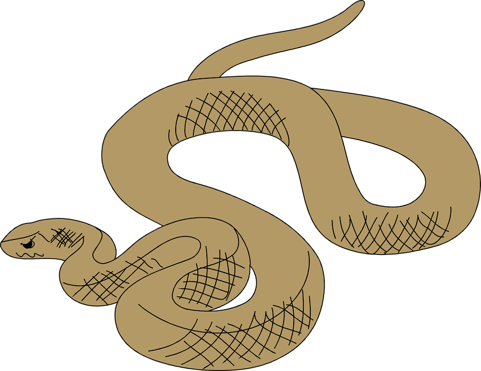 Illustration of a brown snake : Free Stock Photo