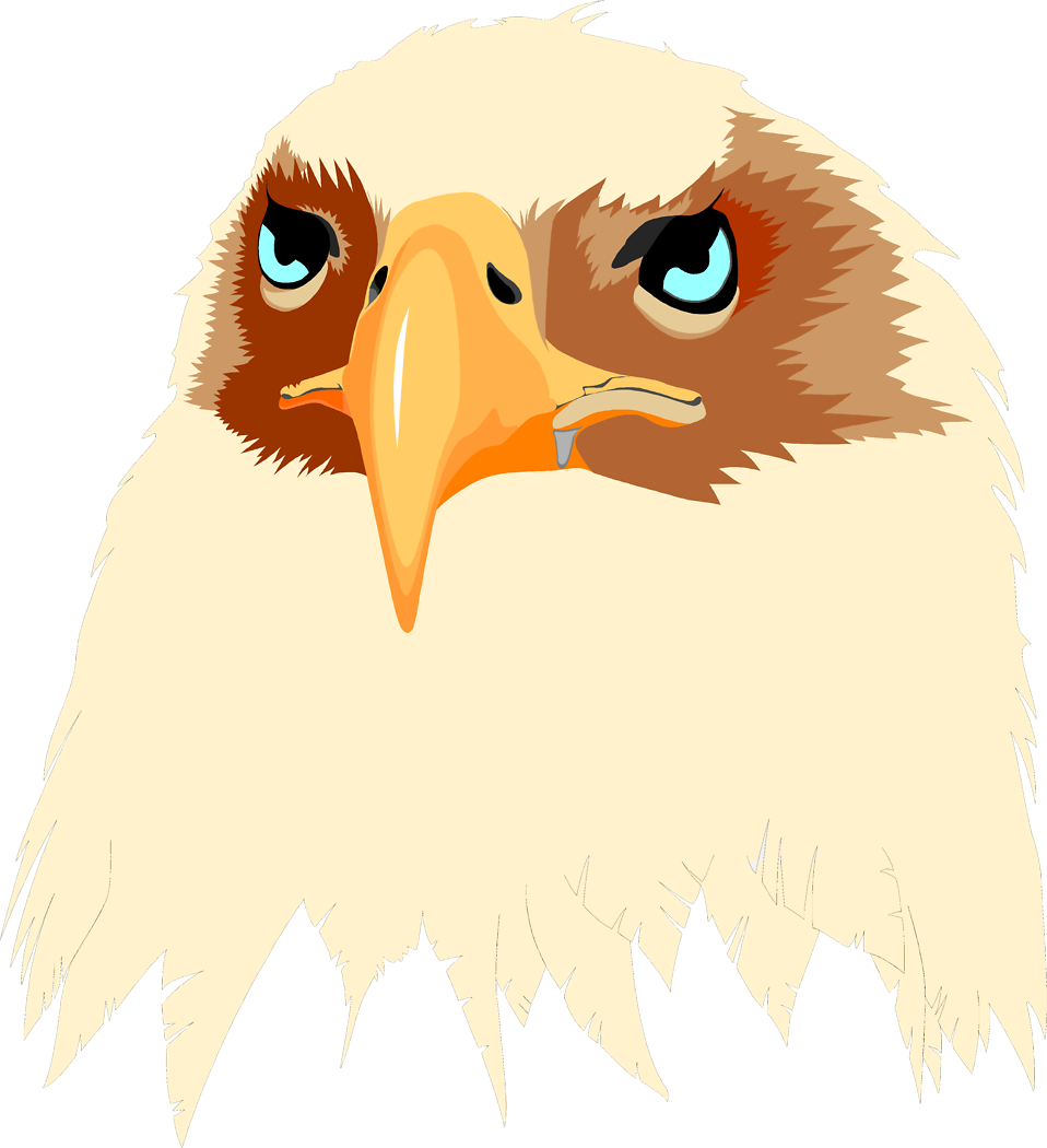 Illustration of an eagle head : Free Stock Photo