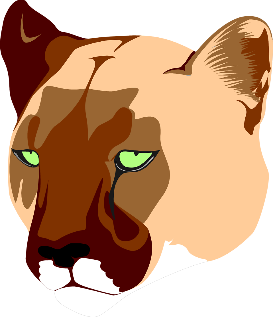 Illustration of a lioness head : Free Stock Photo