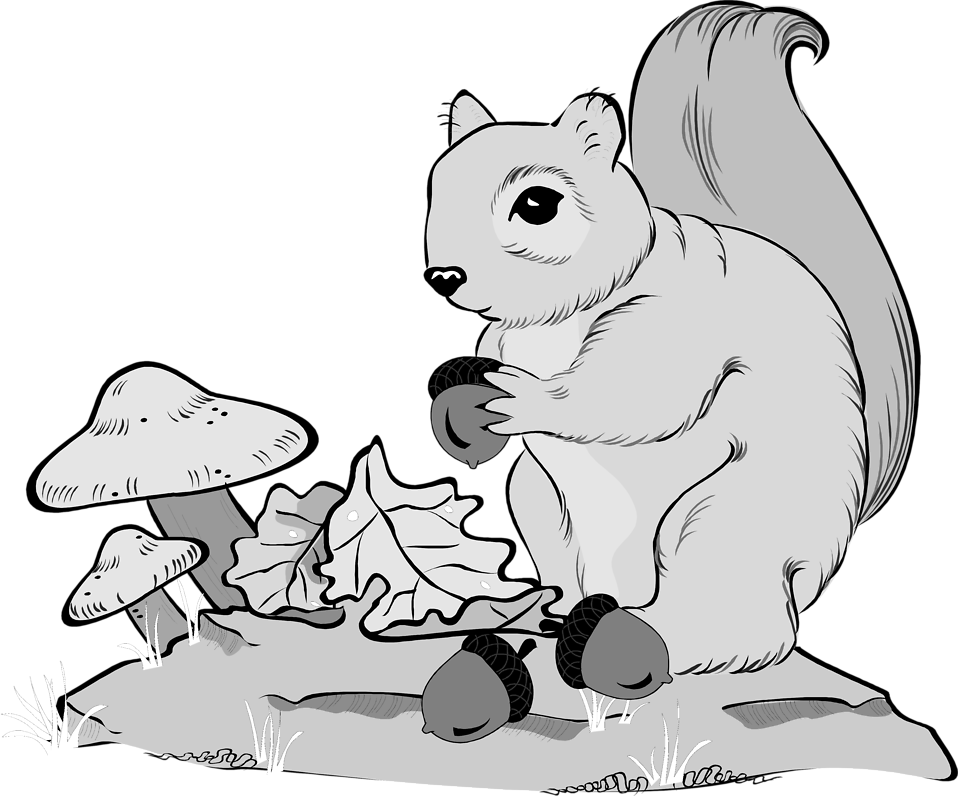 Illustration of a squirrel holding an acorn : Free Stock Photo