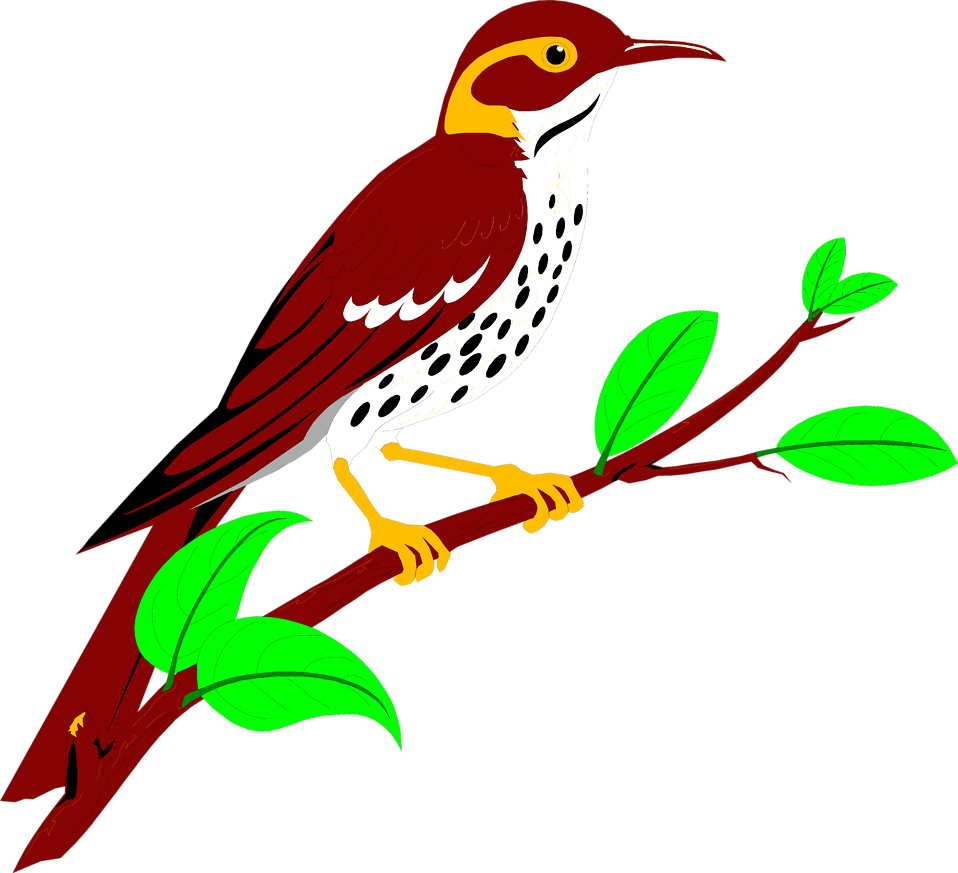 Illustration of a brownish red thrush : Free Stock Photo