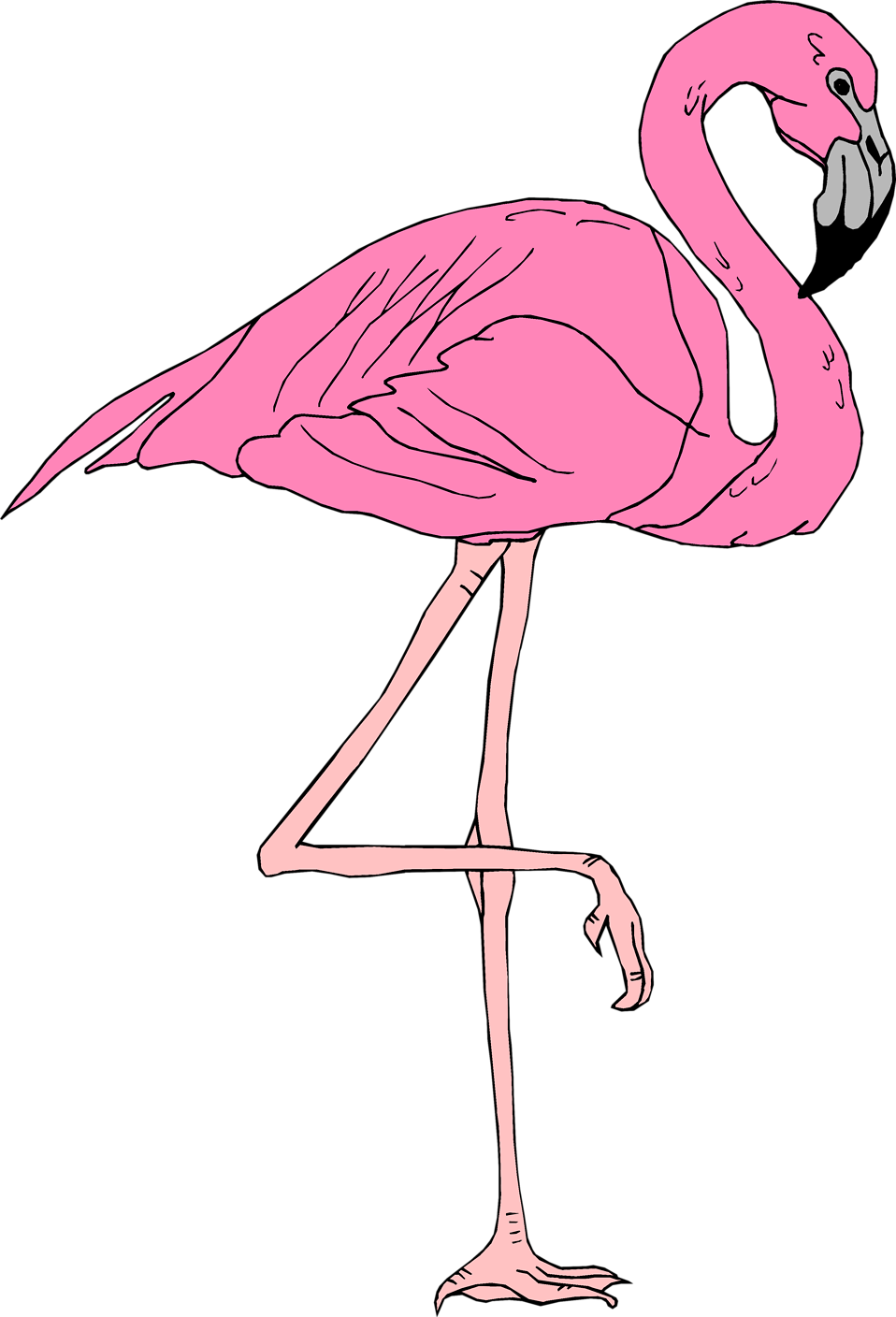 Illustration of a pink flamingo : Free Stock Photo