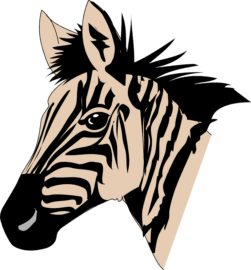 Illustration of a zebra head : Free Stock Photo