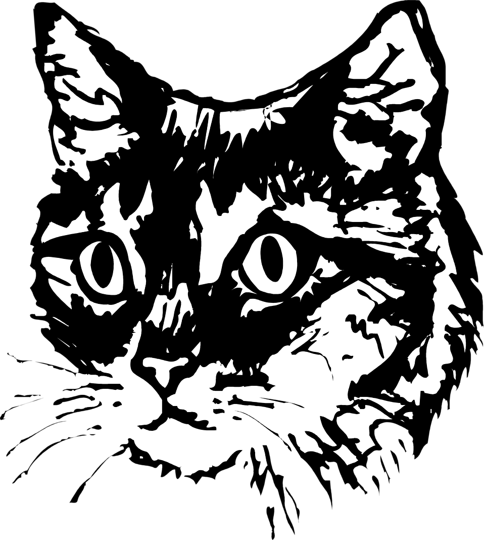 Illustration of a cat face : Free Stock Photo