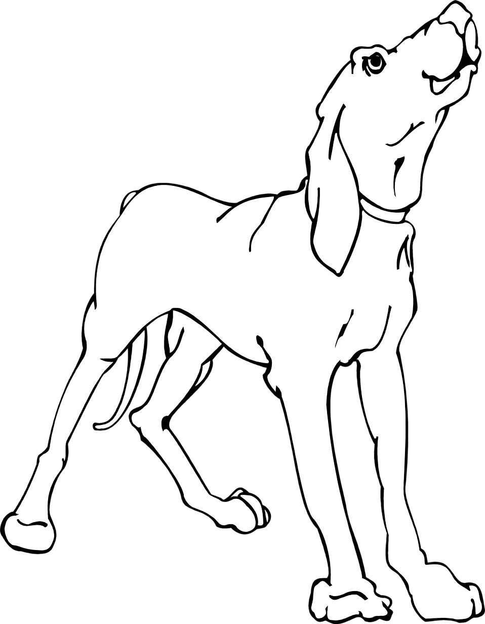Illustration of a hound dog : Free Stock Photo