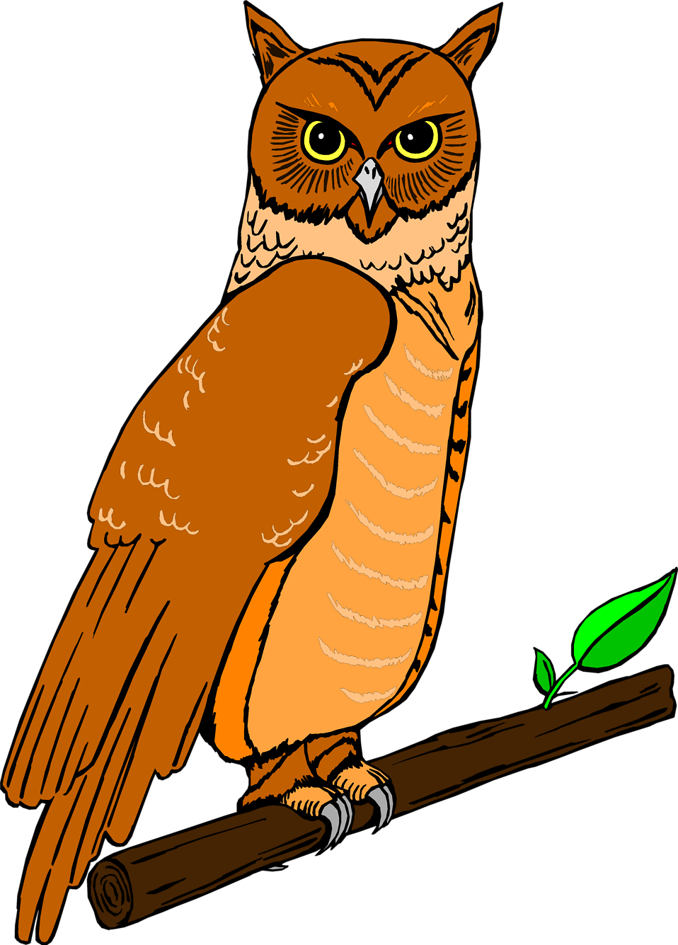 Illustration of an owl perched on a branch : Free Stock Photo