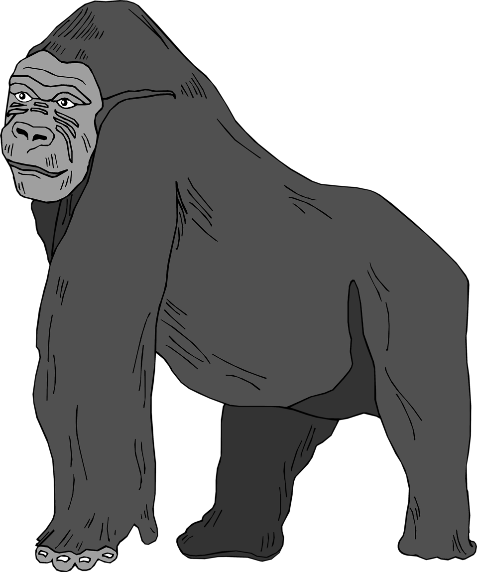 Illustration of a gorilla : Free Stock Photo