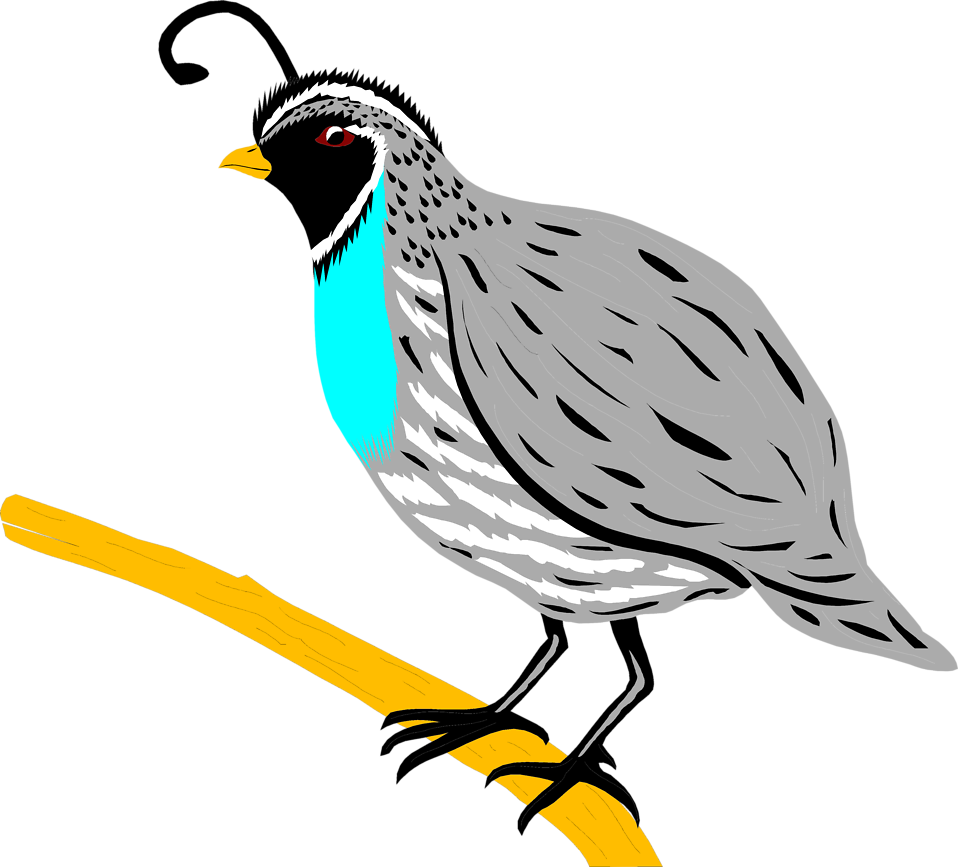 Illustration of  a quail : Free Stock Photo