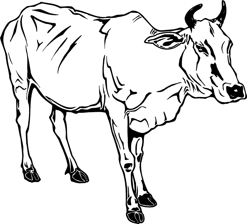 Illustration of a cow : Free Stock Photo