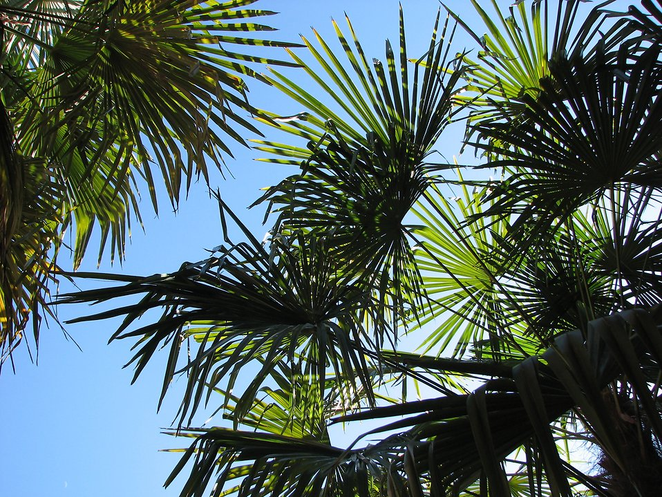 Tall tropical foliage : Free Stock Photo