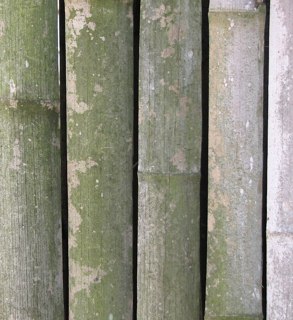 Closeup of a bamboo fence : Free Stock Photo