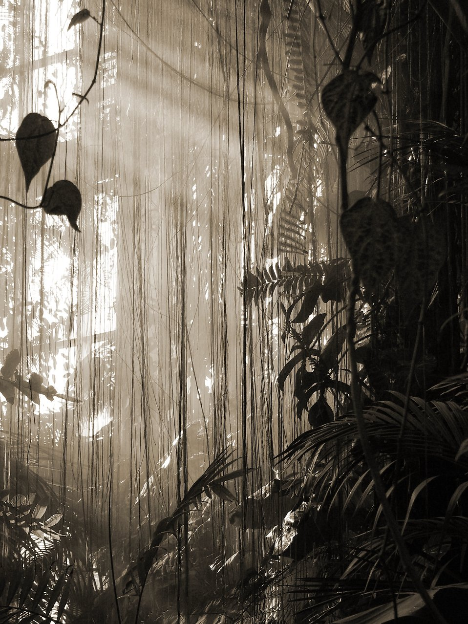 Black and white photo of tropical foliage with a misty background : Free Stock Photo