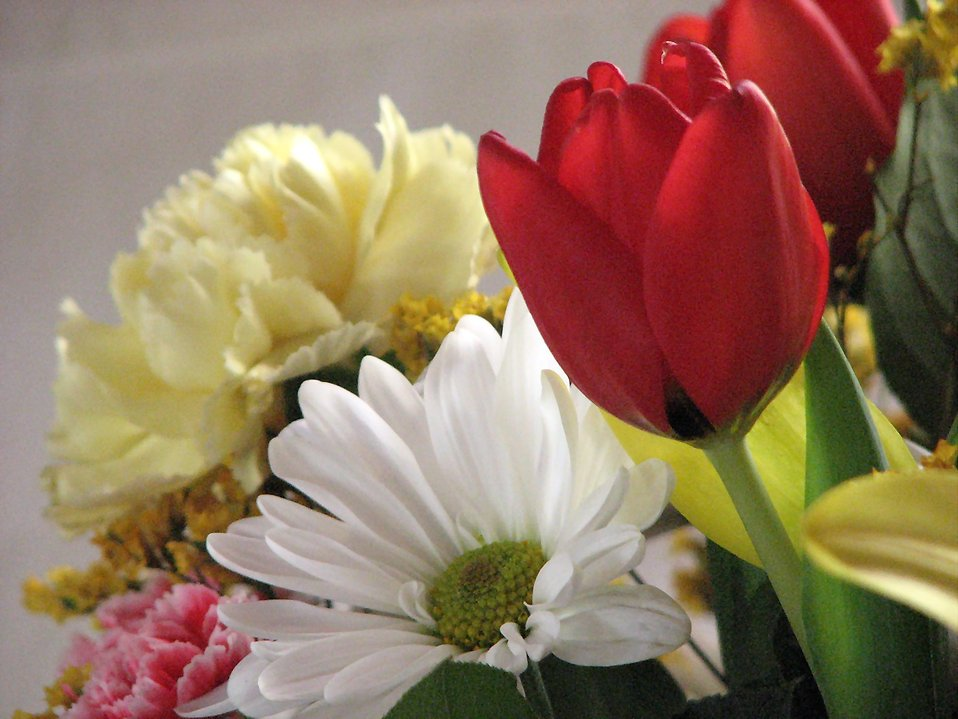 Closeup of a flower bouquet : Free Stock Photo