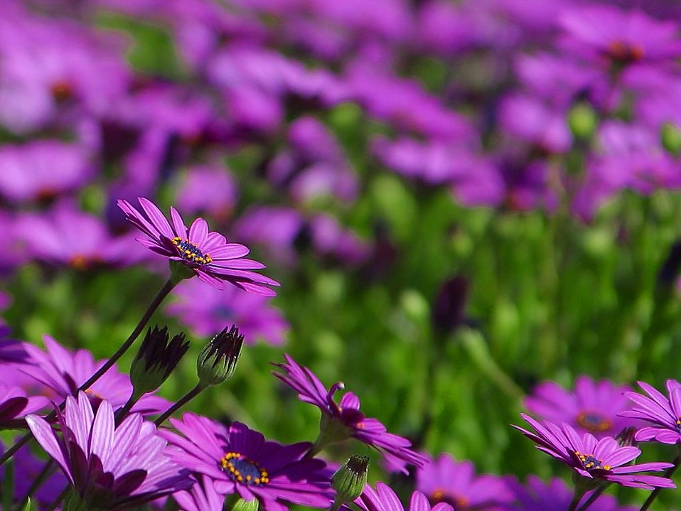 Close up of a bunch of purple wild flowers : Free Stock Photo