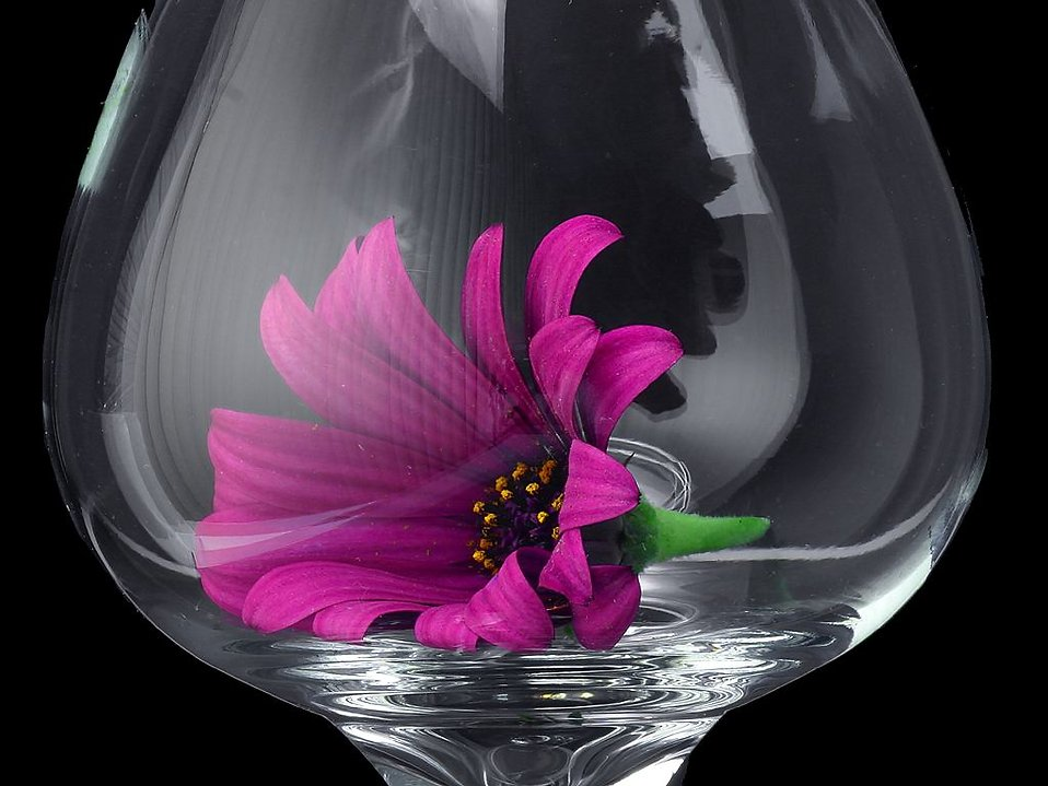 Close up of a purple flower in a glass : Free Stock Photo