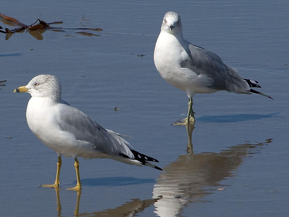 Two seagulls on the beach : Free Stock Photo