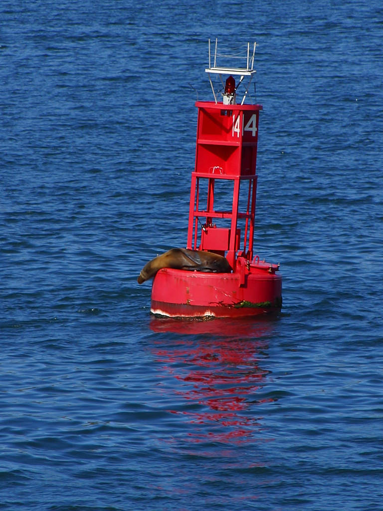 A seal on a buoy in the ocean : Free Stock Photo