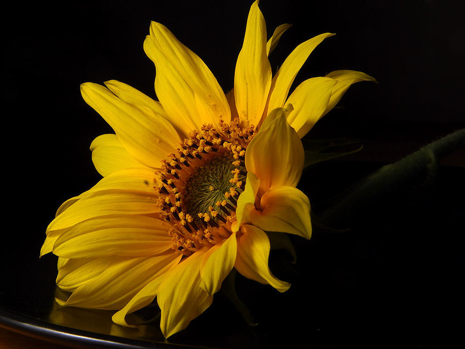Closeup of a yellow flower : Free Stock Photo