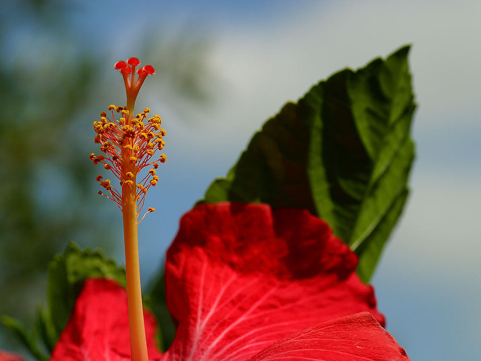 Close up of a red flower : Free Stock Photo