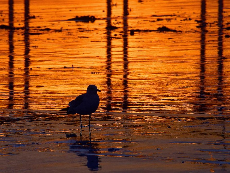 A seagull on the beach at sunset : Free Stock Photo